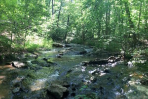 Land Trust Of Virginia and Miller School Conserve 637 Acres