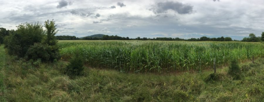 LTV Records Easement on Historic Gilbert Farm in Culpeper County