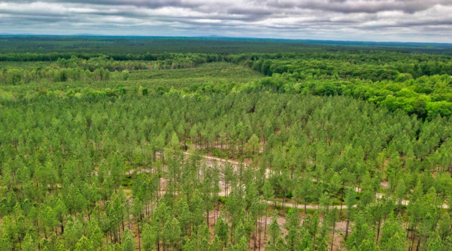 1,026 Acres of Timberland Will Remain in Timber Forever