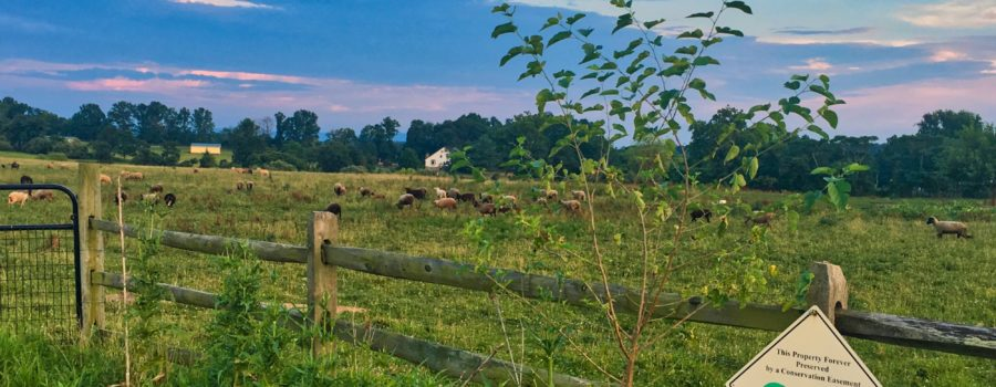 Introduction to Conservation Easements Webinar: December 8th